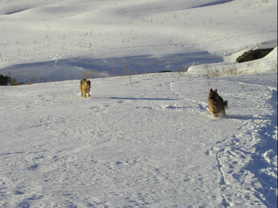 Happy dogs, romping in the snow.  We had a good year for snow during the early parts of 2004.  Mother Nature skipped the usual January thaw so the snow was 3+ feet deep on parts of the reservoir.  Fortunately the crust supported the dogs most of the time and I have snowshoes.